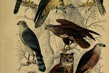Natural History / by Rabbit Ridge Farm (Jordan Charbonneau)