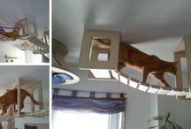 Cat stuff / by Lindee Miller Goodall