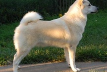 epic dogs :breeds included: / all of the best dog breeds. breed included. so if your looking for a dog this is the place to come! / by Burstingspace