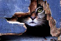 Cute animals / by Carlota Ruiz