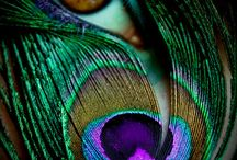 Peacock, My Favorite Color / by Jerri Gullion