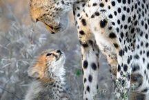 Cute animals / animals / by Dawn Marie Jones