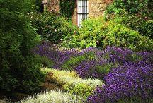 * Garden * / by Johanna's Inspiration