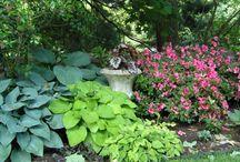 gardens / by Nanette Kanarr