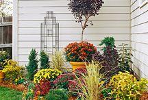gardens / by Emily Harrington