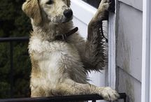 Puppy Dogs / Nothing more welcoming than coming home to wagging tails!! / by K D Durham