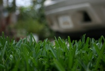 Lawn / by Plant Care Today