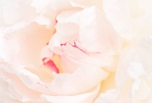 photography | florals / flowers / by Jaclyn Clayton
