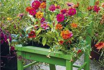 Gardening that I love / gardening / by Beth Johnson-Dedrickson