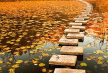 Pathways/Walkways / by Scenic Specialties