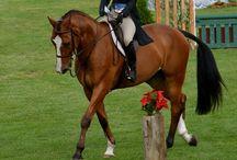 I Love Horses!!  / by Kayleen Norris
