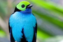 bird watching  / by Diane Detrich