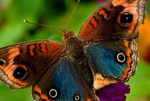 Breathtaking BUTTERFLIES / by T Russell