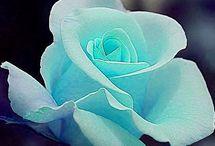 Flowers  / by Lisa Lanford