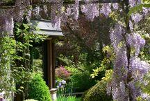 Garden / How does a garden grow? / by Pamela Quinn