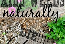 GROW where you are PLANTED / All things gardening and landscaping / by Julianne Balster