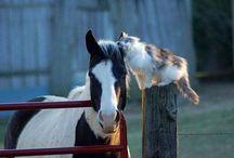 Animal Photography / by Missy Larson-Sarginson