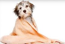 Pet Grooming Services Santa Barbara / Angela's Super Grooms wants to personally invite you and your pet, dog or cat, big or small we groom them all. Angela's Super Grooms, owned and operated by Santa Barbara's only Certified Master Groomer with National Dog Groomer Association is focused on providing high-quality service and pet satisfaction - we will do everything we can to meet your expectations. / by Angela's Super  Grooms