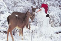 Whitetail Deer / by Brian Vogelgesang