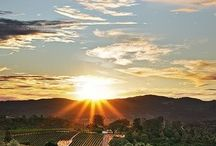 Napa / Life in Napa CA / by Christy Gronseth
