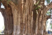"""Árboles / """"Un árbol es un organismo vivo maravilloso que da cobijo, comida, calor y protección a todos los seres vivos. Incluso da sombra a quienes empuñan un hacha para cortarlo """" Buda. / by norma c"""