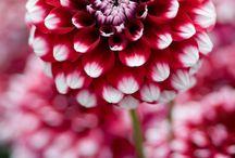 Garden / by Trina Marie Pederson