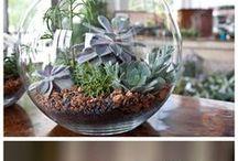 gardening / by Savannah Hale