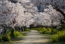 Japan / by Kesha Krieble