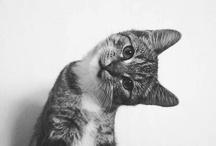 animals <3 / by Tara Penny