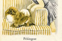 Dog obsession / I love my Pekingese and taco terrier  / by Teresa Trevino