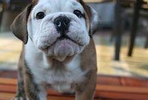 Pets I want! / by Kristin DiPerri