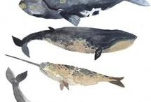 i animals whales / by Brigid Pena