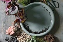 gardening / by blue muscari