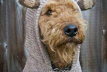 Woof! / by Carol Yancey