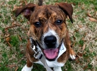 ADOPTION:  Saving those who need us  / Helping dogs and cats find loving forever homes - please help if you can!!  Share with others / by Molli Adams
