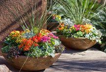 flower pot ideas / by Viviana Salgado
