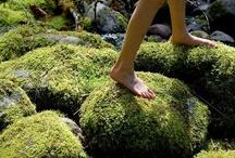 Moss. / by Cheryl Watson