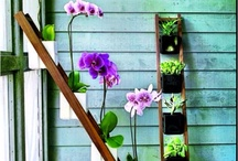 Interior Plantscaping  / by Red Lotus Gardening Co.