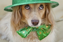 Green up for St. Patrick's Day / by Holly Zahn Manske