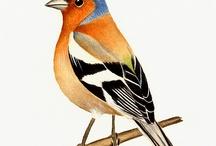 birds / by Marie Christine Chasseraud