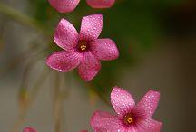 Flowers / by Kim McMahan