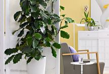 Potted plants / by Jean Munroe