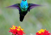 Birds / by Bruce Park Arts