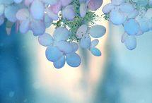 Blue / by illya