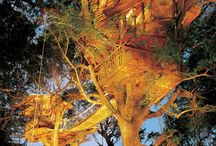 Tree Houses / by Megg Ebling