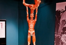 BODY WORLDS / by KY Science