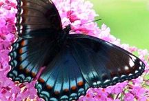 BUTTERFLIES & BEAUTIFUL / by Julia E Burke