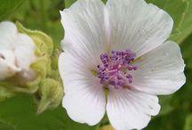 Herbs for Healing / by Annie Stuart