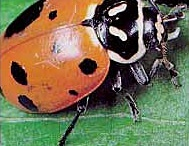 Good Garden Insects / Not all bugs are bad in your garden. These beneficial insects help keep your garden healthy by preying on bad insects, providing a food source for birds and increase pollination. Make them welcome guests in your veggie patch. / by Kat White