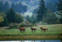 Horse power / by Karen Rinehart